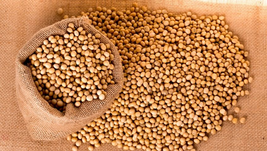 soybean commodity